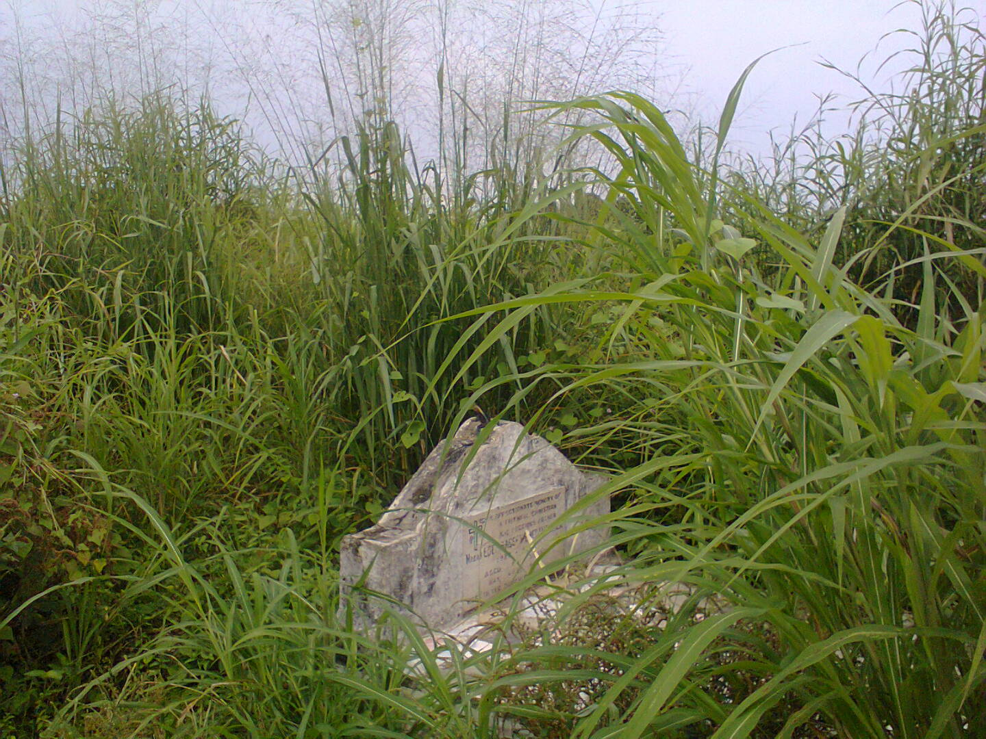Nigeria's Famous Activist, Margaret Ekpo's Resting Place, Over Grown With Weeds