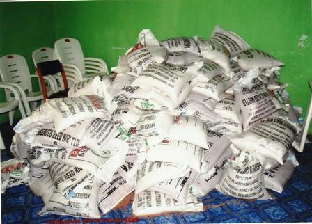 Bags of rice seedlings