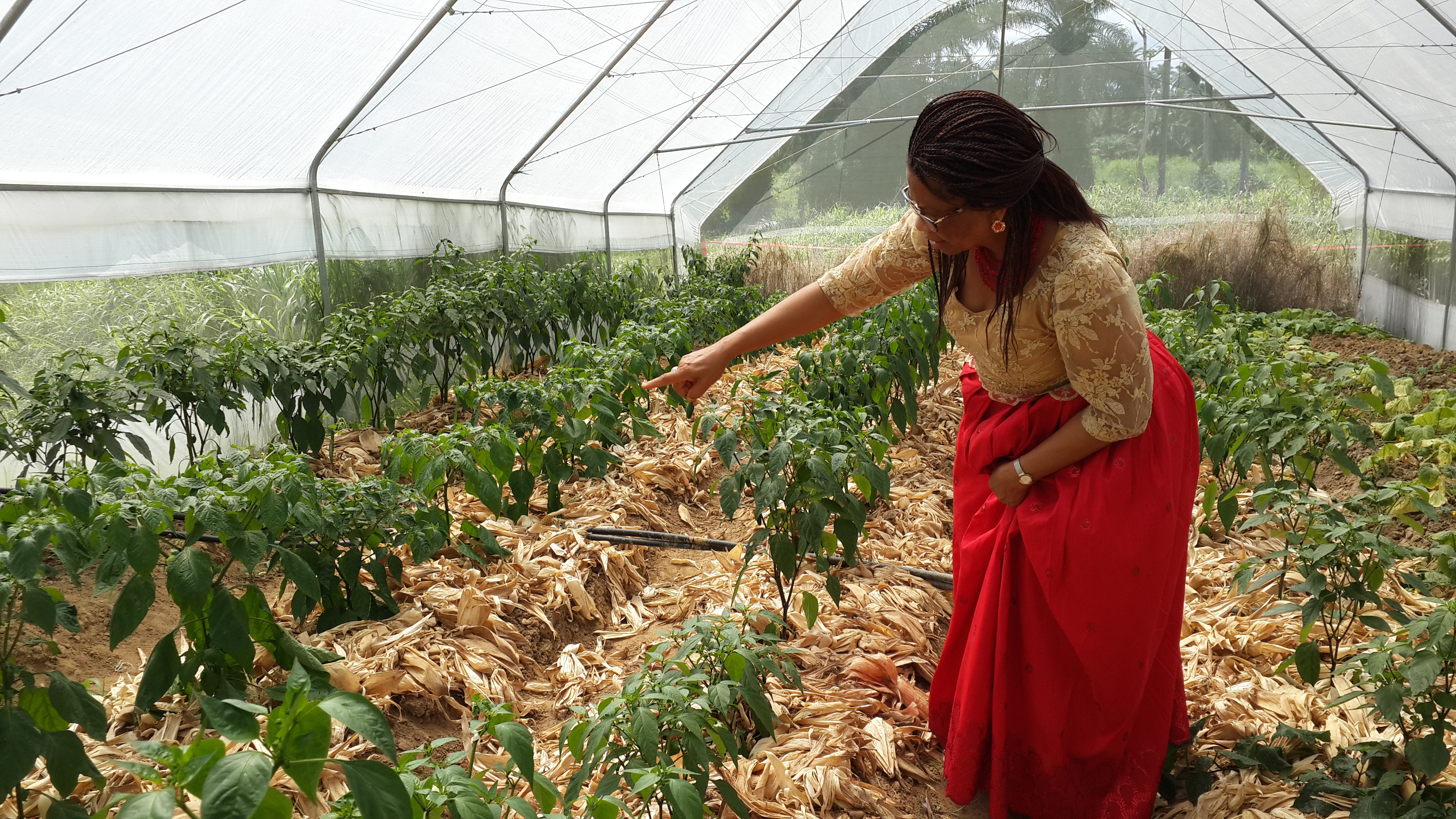 Hon. Nkoyo Toyo in her constituency farm project