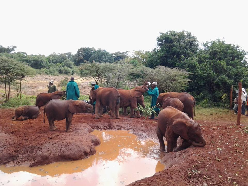 Nairobi Safari Park