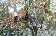Obudu Wild Fires: Community Relations Officer Implores NEMA, SEMA To Rescue Affected Communities