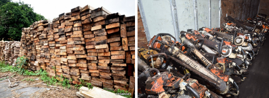 Some of the seized woods and chain saws confiscated from illegal loggers in Calabar, today