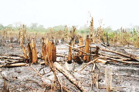 File picture of burnt farmlands from a previous skirmish between the two neighbors