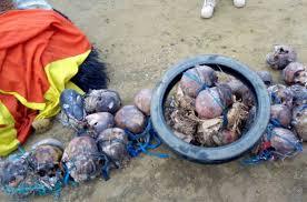 skulls (picture credit: google)