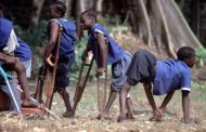No Polio Case In Cross River Says FG