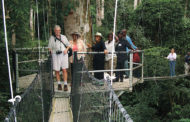Reactivating The Afi Forest Canopy Walkway By NANDI BETTE